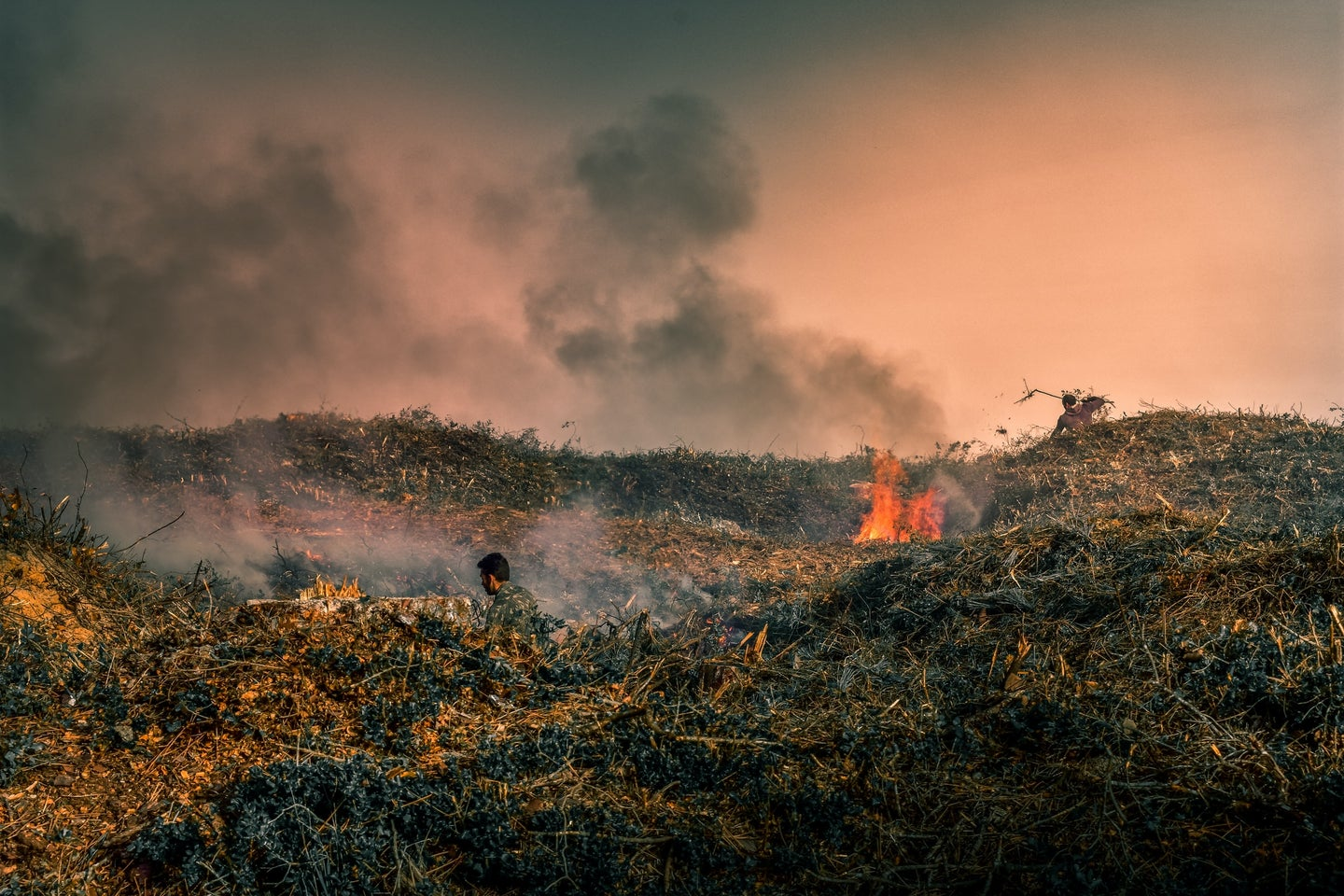 grassy area burning in a forest fire