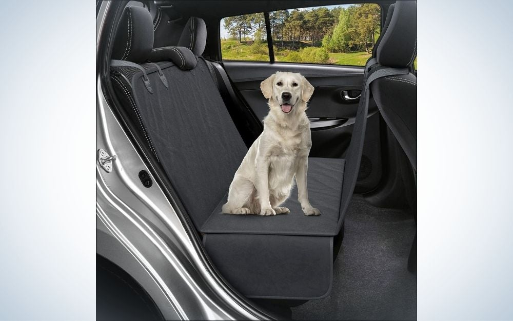 Big white dog standing inside the car over the grey cover seat.
