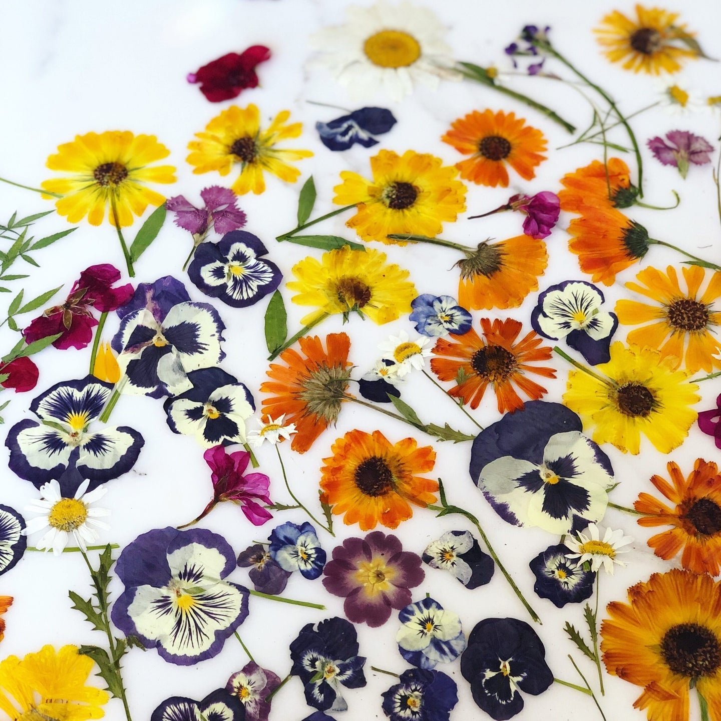 Pressed and dried flowers in purple, orange, and yellow
