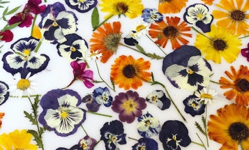 It's time to start adding edible flowers to your food