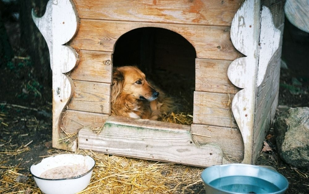 A brown dog standing inside the wooden dog house outdoor