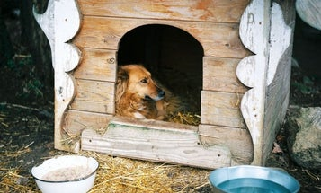 Best dog houses: You (and your pet) won't be left out in the cold with these top indoor and outdoor choices