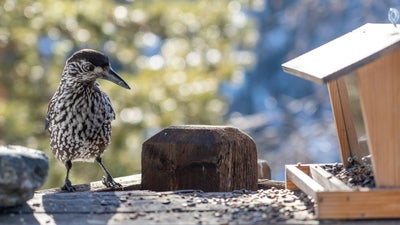 Salmonella could be lurking at your bird feeders and baths. Here's how to clean them.