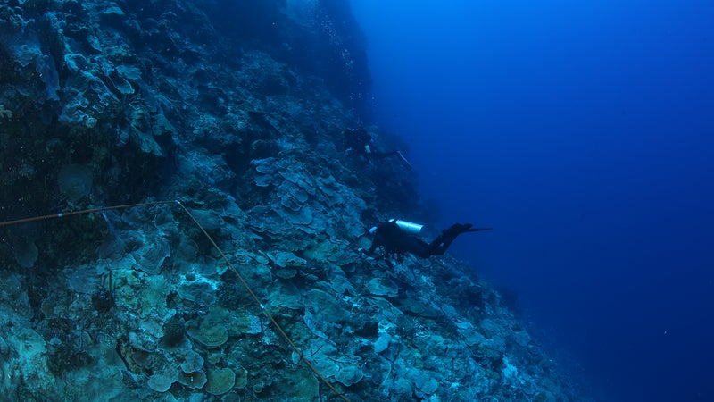 How divers found 4 new coral species, hidden in plain sight
