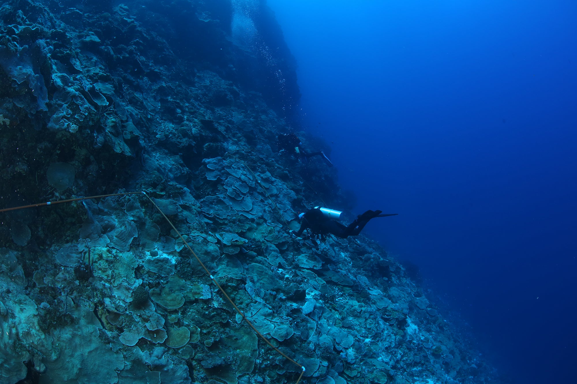 Two divers collect coral samples from reef.