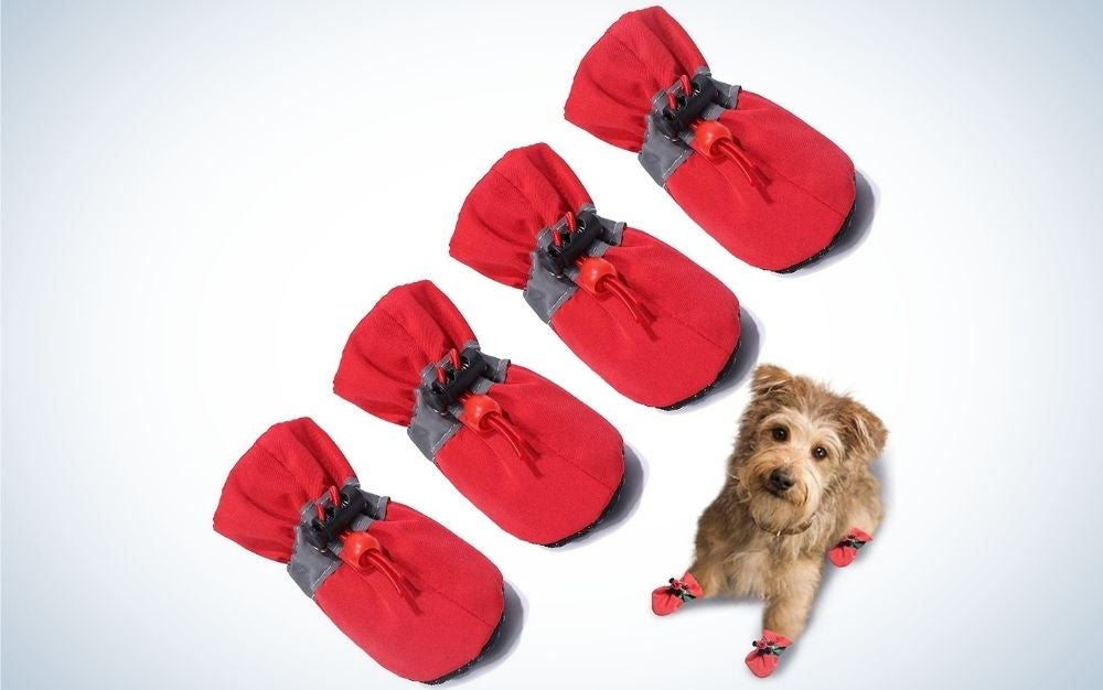 Four pair of red dog boots in line with each other and a dog under them.