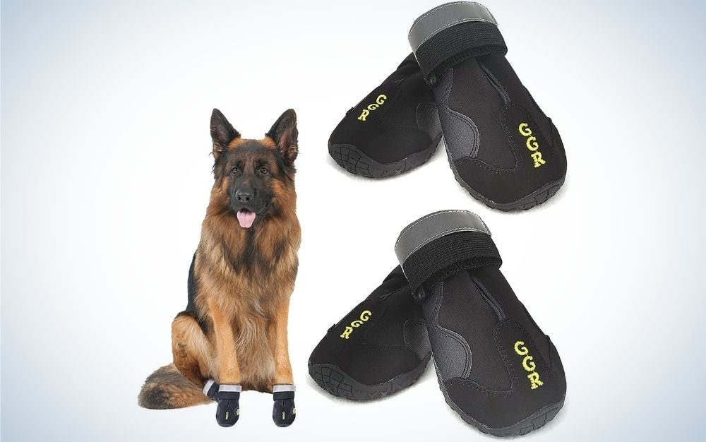 Two black pair of dog socks and a brown dog standing on the picture.