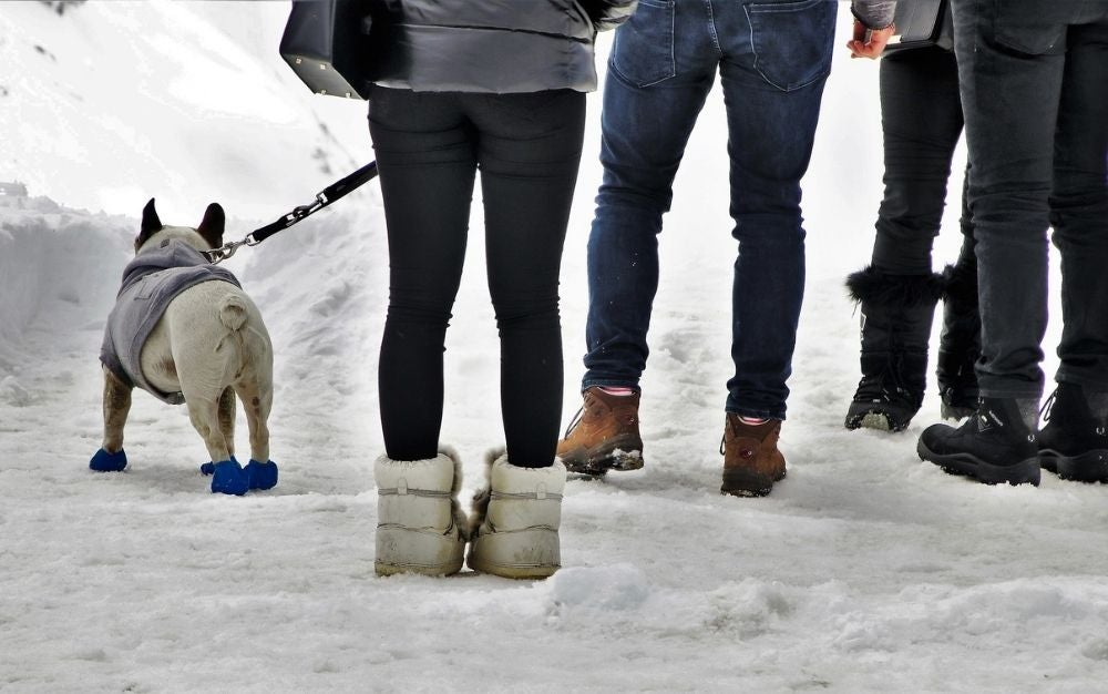 Some people walking with boots on the snow with a dog under them wearing dog snow boots.
