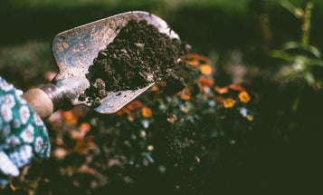 Compost can help protect us from food poisoning