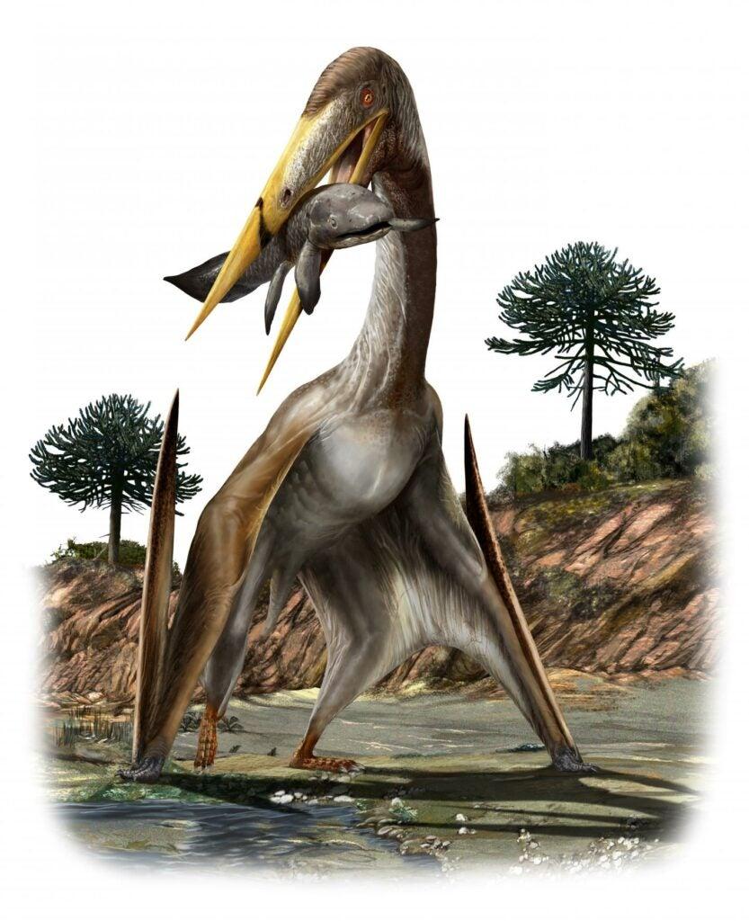 An artist's rendering of a pterosaur (Alanqa saharica).