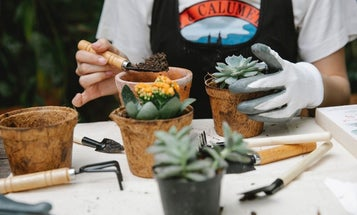Best gardening gloves: We weed out the choices so you can get to work