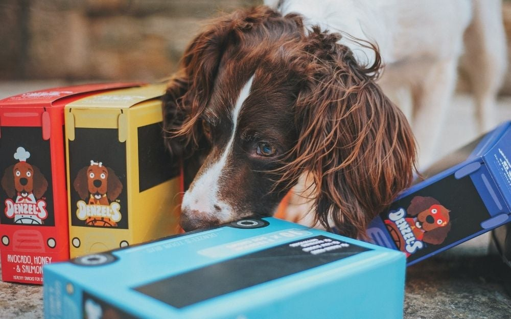 best pet-food containers