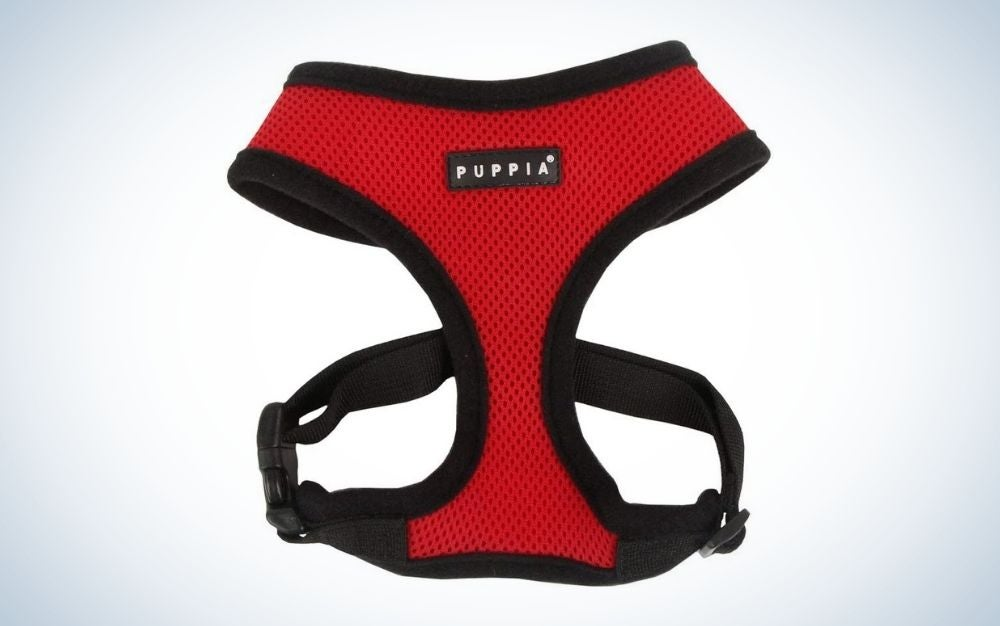 Red and black dog harness with adjustable chest belt and quick release buckle
