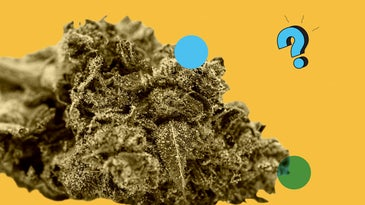 Marijuana over top of the Ask Us Anything logo