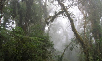 Why forests in the Andes are crucial to fighting climate change