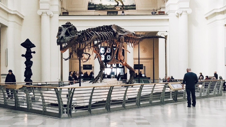 Dinosaur bones in museum.