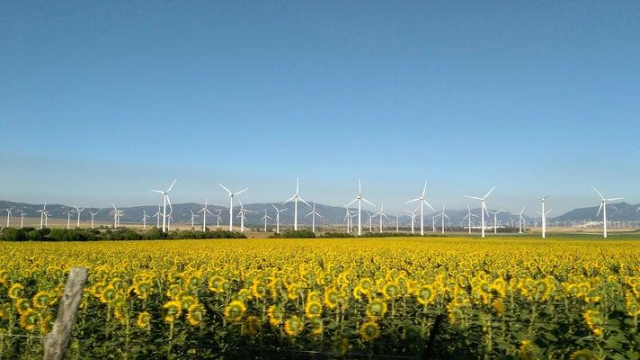 Wind turbines behind a sunflower field