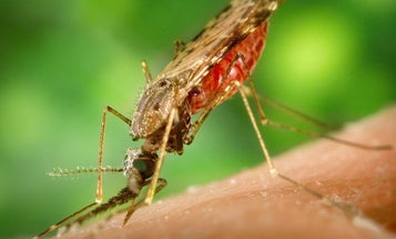 Scientists have created the most effective malaria vaccine of all time