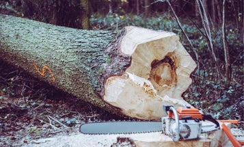 Best chainsaw for your DIY or landscaping project