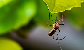 Best insect repellent: bug sprays, lotions, wipes, essential oils