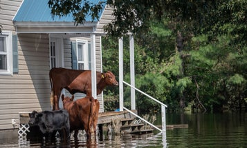 Homes in flood-prone areas should be getting cheaper. They're not.