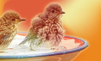 Build a classy, easy birdbath with vintage finds