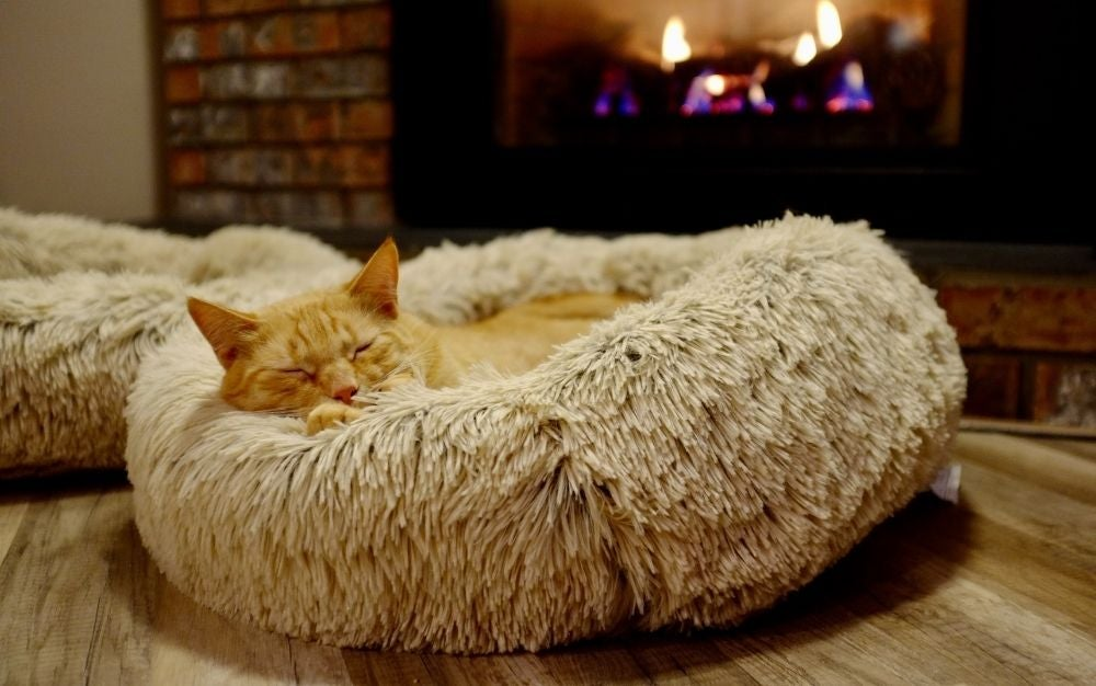 Best cat beds: Fulfill your cat's dreams of comfortable slumber