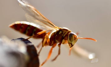 The most effective ways to avoid bee, wasp, and hornet stings