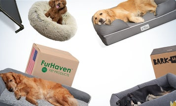 The best dog beds for your favorite furball