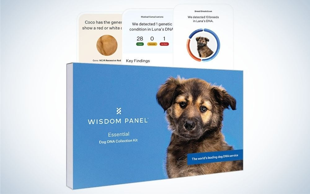 Dog DNA test for ancestry, traits, and medical complications