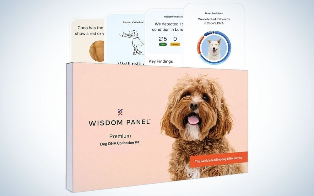 Wisdom Health dog DNA test