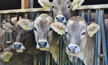 It's not just methane—meat production fills the air with noxious particulate matter too