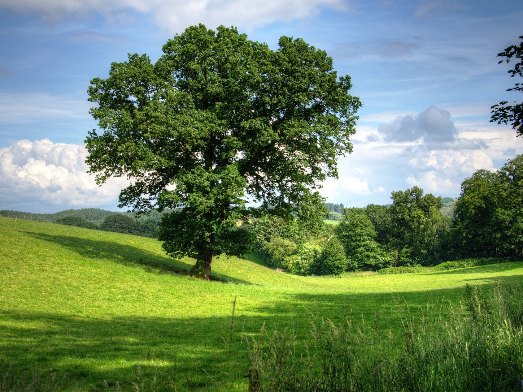 Trees need wind to reproduce. Climate change is messing that up.