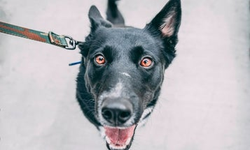 Keep your dog close and controlled with the best dog leash