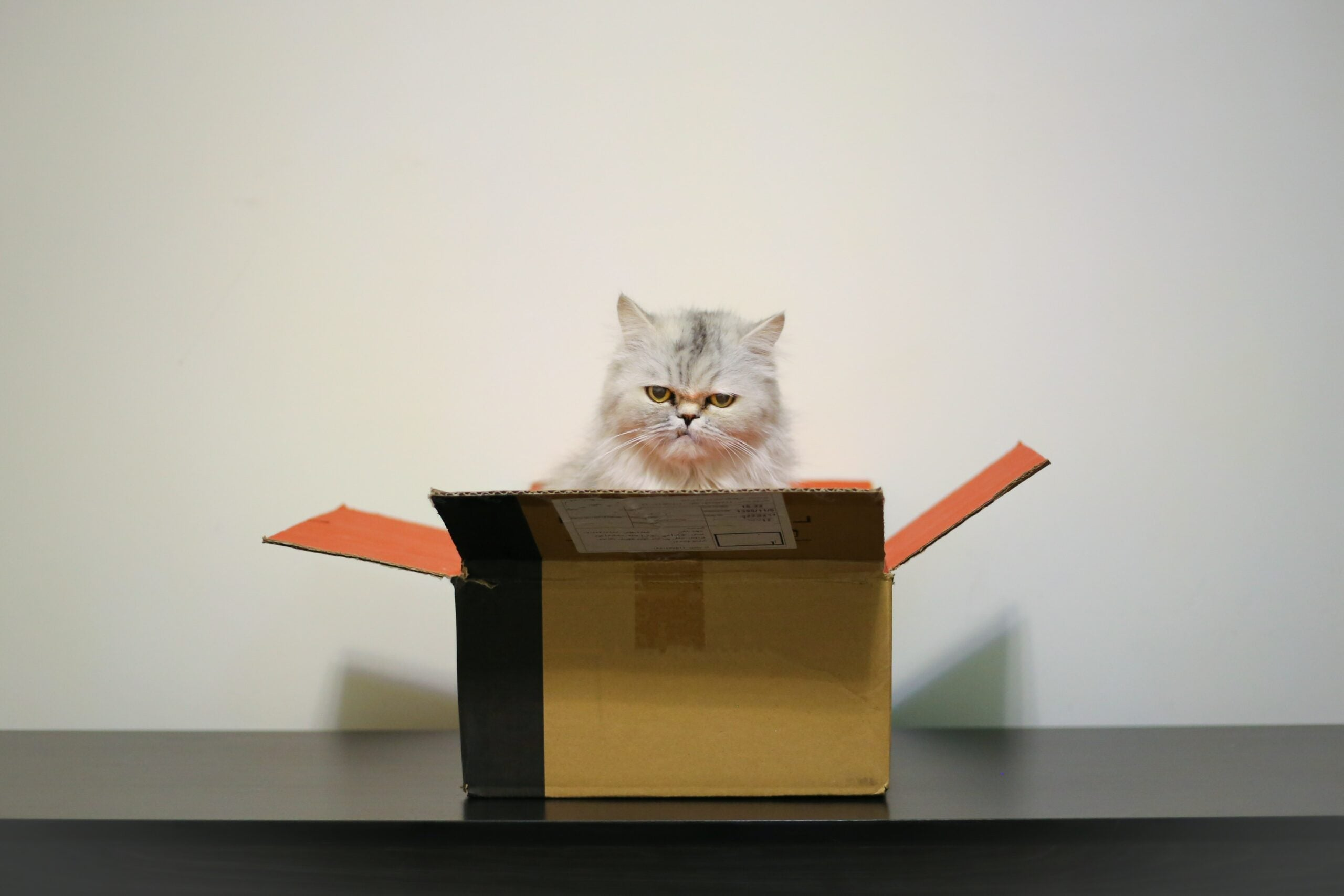 Cats love sitting in boxes so much they'll even sit in fake ones