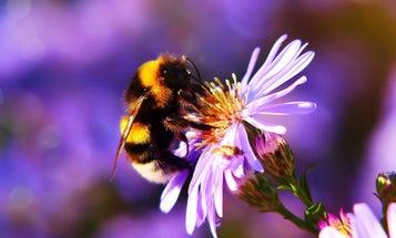 Build a garden that'll have pollinators buzzin'