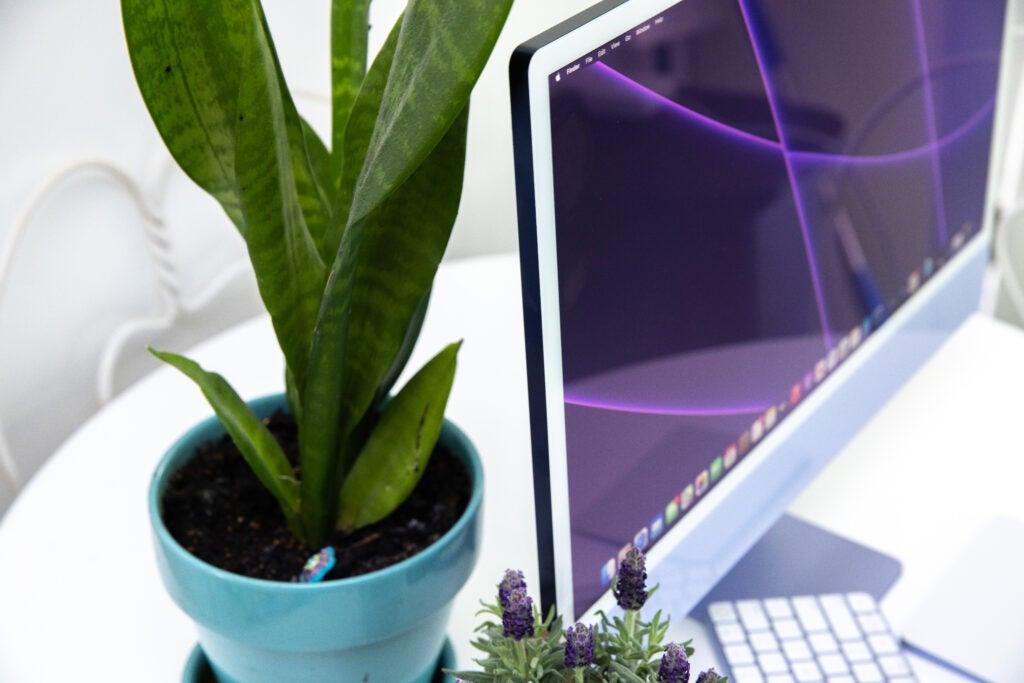Apple iMac desktop computer on a desk next to a plant