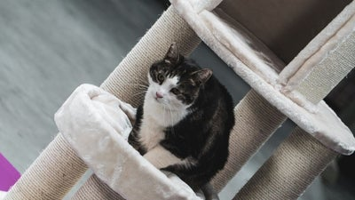 The best cat tree: Update your feline furniture to keep your pet occupied and at ease