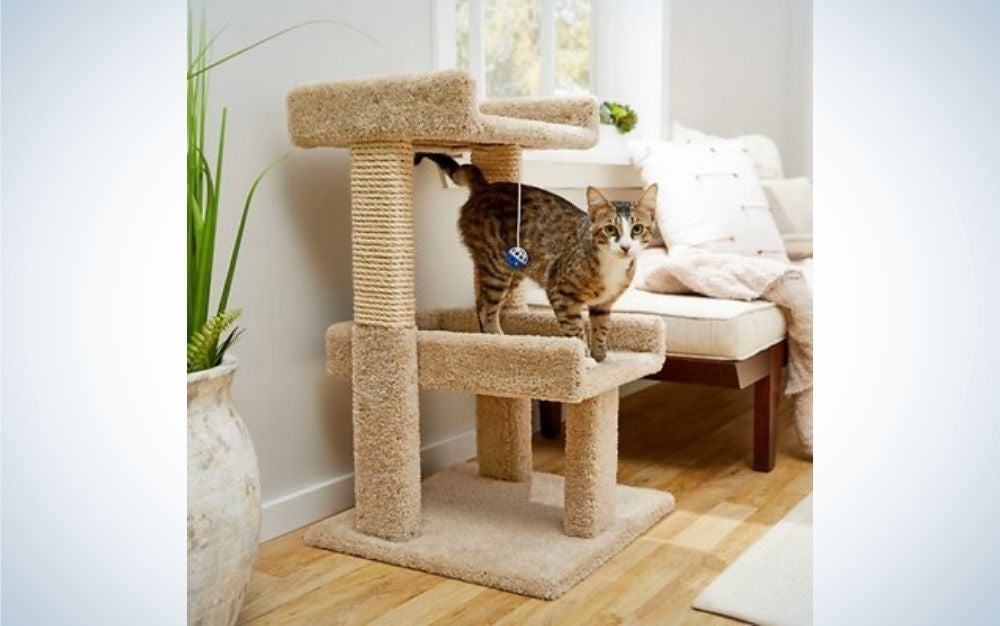 A cat standing over a small wooden beige cat tree with two pairs of floors.