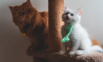 Best cat scratching post: The cat supplies that will save your sofa