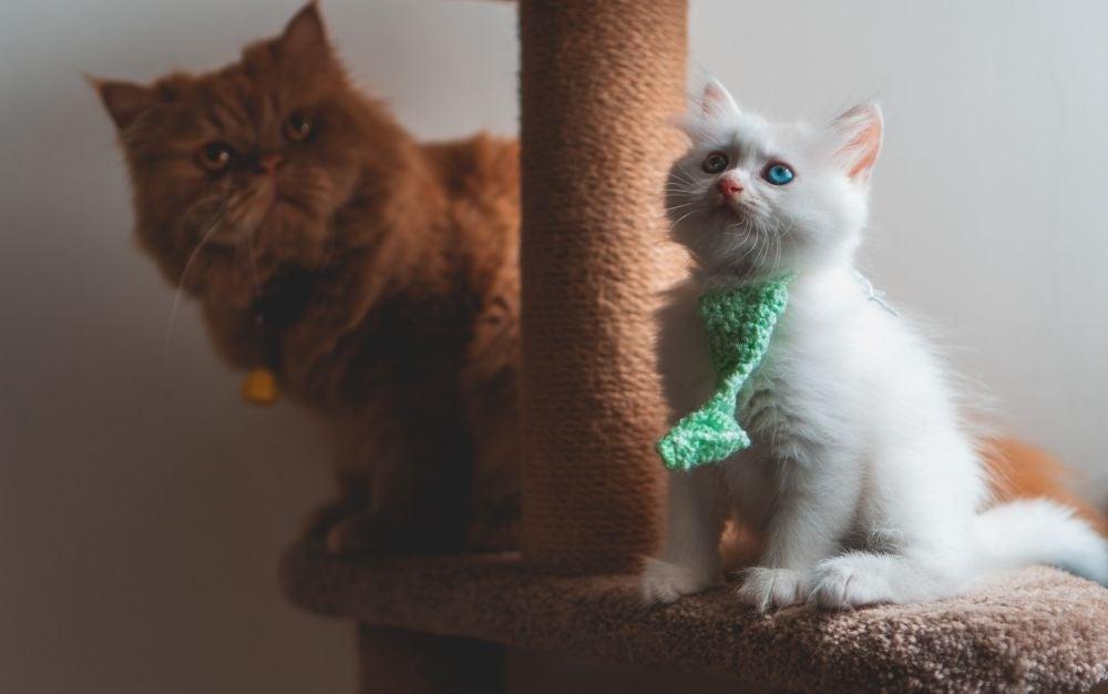 cute kittens cat scratching post