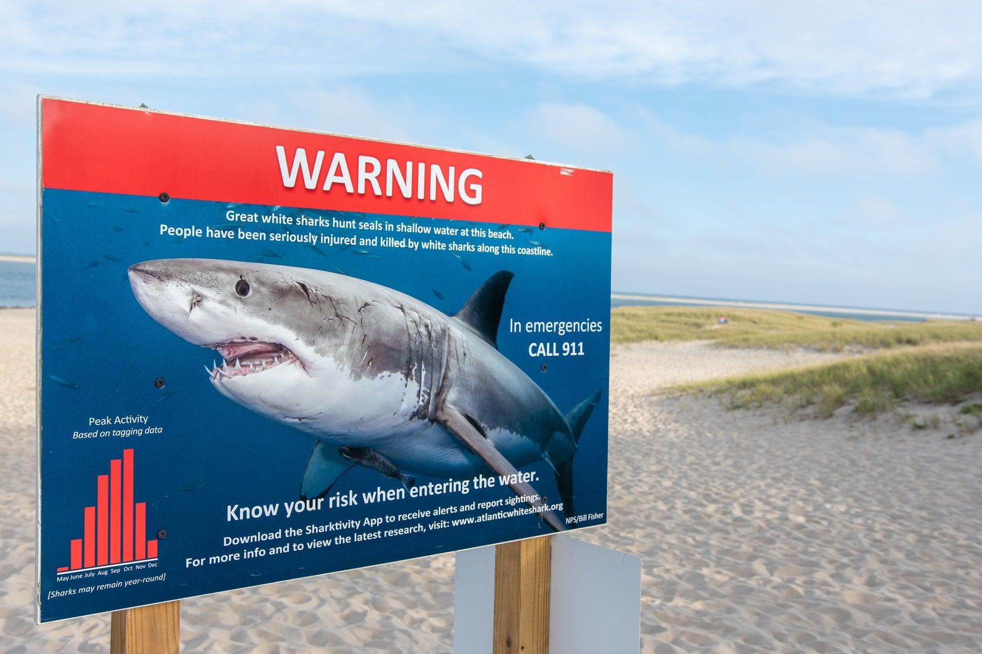 Beach sign warning of great white shark sightings in Chatham, Massachusetts