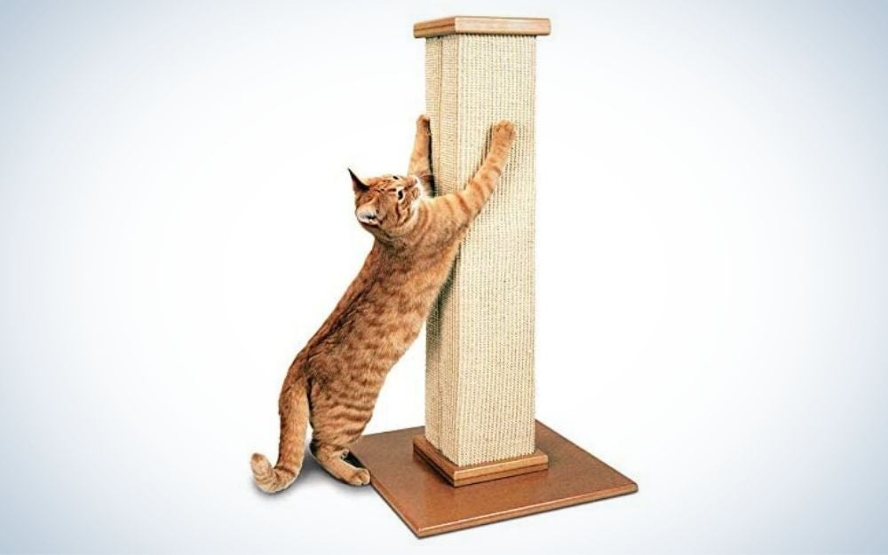 Beige cat scratching post and a brown cat