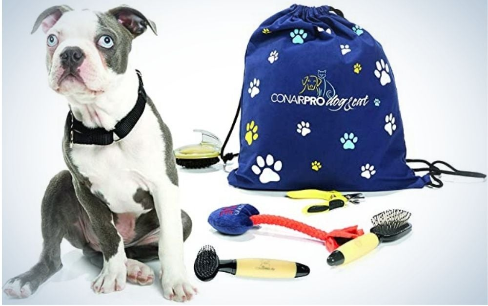 A blue bag with different colored signs with dog paws and a dog which is surrounded by dog toys.