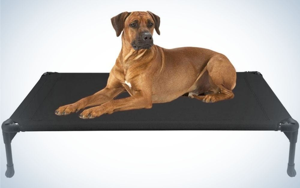 A large brown dog which is standing on its flat and strong black seat.