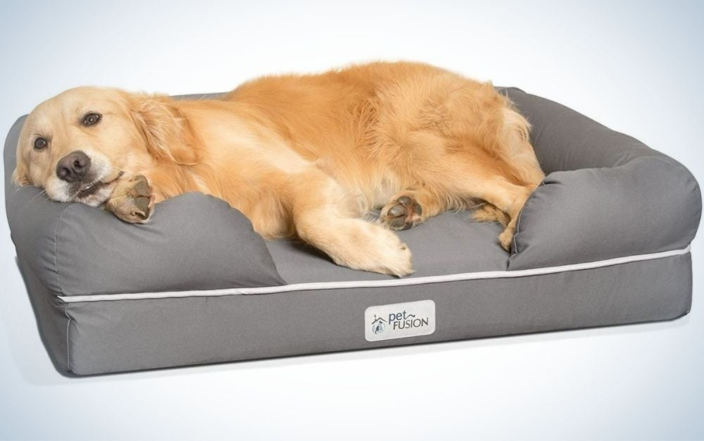 A big brown dog laying on his bed in a grey color and with a neck supportive bed.