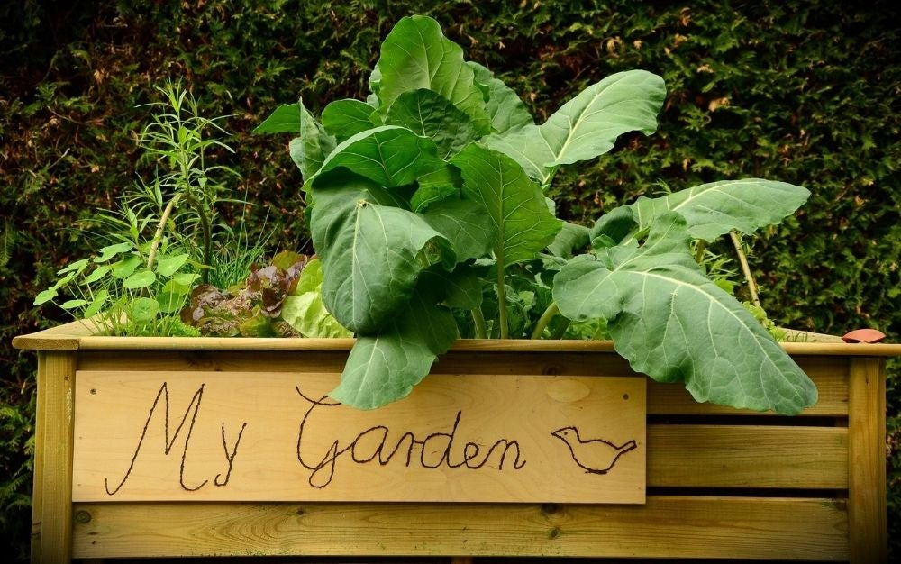 A garden raised bed in wooden material with green flowers and large leaves in it.