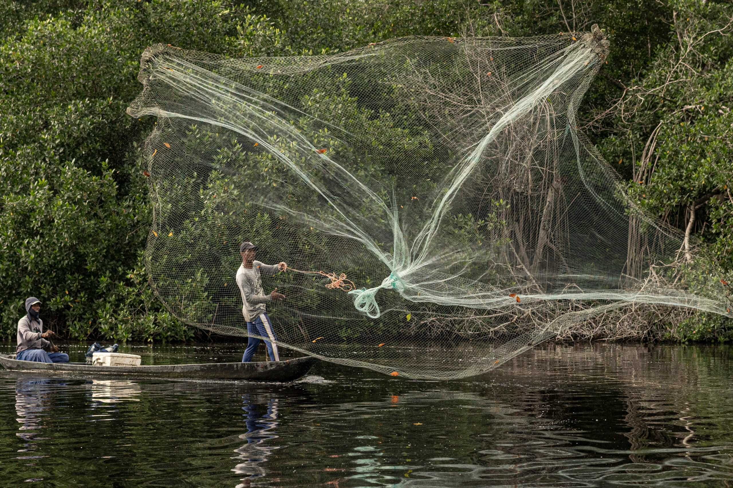 Two men throw a net from a boat in the Colombian mangroves.
