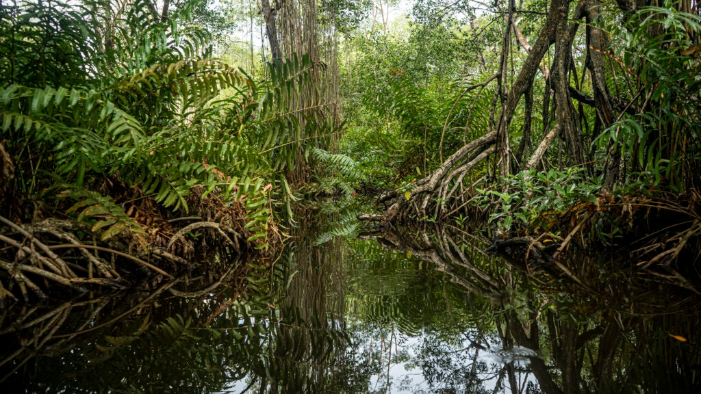 'Blue carbon' is a win-win for endangered coastal ecosystems and carbon sequestration