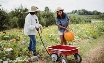 Best wheelbarrows: Push, pull, and transport anything you need